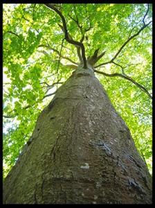 arbrecadre